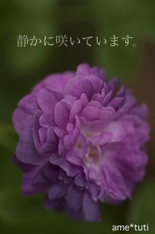 _DSC5472b.jpg