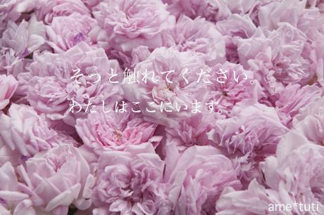 _DSC5478b.jpg