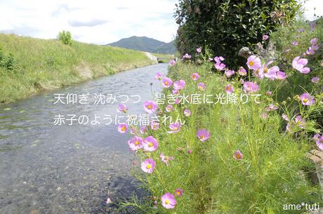 _DSC1467b.jpg