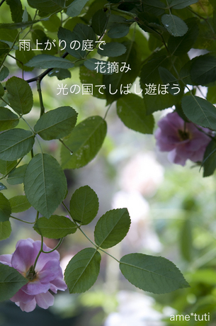 _DSC4211b.jpg