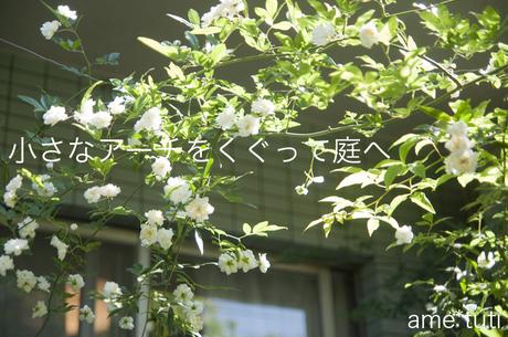 _DSC6306b.jpg